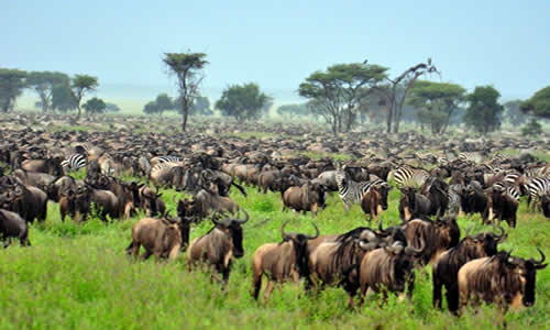 northern circuit -Tanzania safari tours