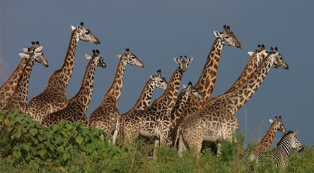 Arusha national park safaris-tanzania safari tours and travel guide